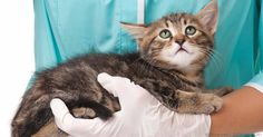 Chronic kidney disease, a leading cause of death in most domestic cats, happens when her kidneys are gradually and irreversibly deteriorating. http://healthypets.mercola.com/sites/healthypets/archive/2012/08/06/kidney-disease-in-cats.aspx