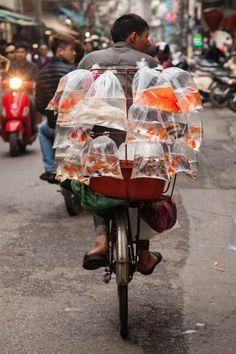 Mobile fish salesman in Hanoi, Vietnam
