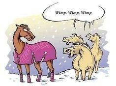 What all the other horses think