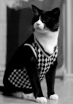 Fancy Cat- I love this picture!