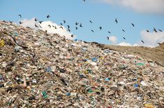 By sorting our waste into Compost, Recycling, and Landfill bins, we can make a huge impact.