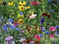 Western Wonder - Bird and Butterfly Mixture - Wildflower Seed Mix, $29.99 (http://westernwonder.com/bird-and-butterfly-mixture-wildflower-seed-mix/)