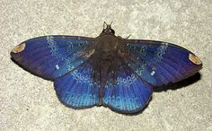 Another moth from S Venezuela | Flickr - Photo Sharing!