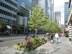 Trees planted in Silva Cells along Bloor Street (Toronto, Ontario, Canada) in 2012. In addition to setting minimum soil volumes for street trees of 30 cubic meters (1,059 cubic feet) per tree, they have set a goal of increasing their overall tree canopy from 17 percent to 40 percent. Silva Cells help trap and filter rainwater, and allow greater volumes of soil and prevent soil compaction, helping urban trees survive.