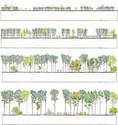 Visto en Pinterest: desarrollo de un bosque de Fagus sylvatica combinado con Fraxinus excelsior. Anders Busse Nielsen & Rasmus Bartholdy Jensen. Enlace.