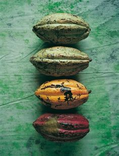 cocoa pods--colors of nature inspiration