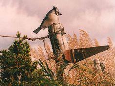 ales con Aves, Brian LaSaga, CanadáHomus Art: Cuadros Hiperrealistas en Acrílico de Paisajes Natur