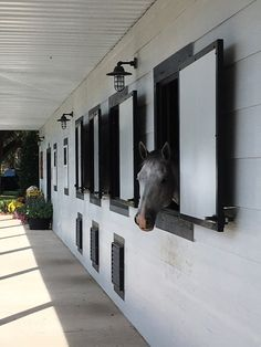 a content horse looking outside