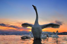 Photo Dream of swan by ryu jong soung on 500px