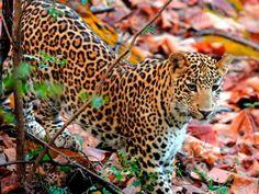Satpura National Park - in Madhya Pradesh, India