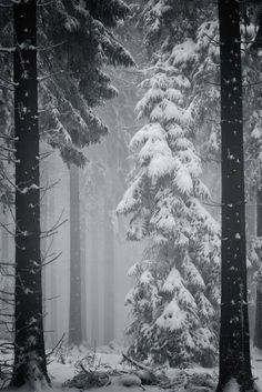 L'hiver est ma saison préférée. J'aime me cacher dans d'énormes et larges pulls biens chauds  et boire des cafés dans mon lit. Ecouter une musique enivrante en voyant les flocons de neiges tomber lentement. Chaque endroit que vous pensiez bien connaître se métamorphose sous cet or blanc, vous plongeant dans un tout nouveau décor. https://www.youtube.com/watch?v=X26sBc7HLxM