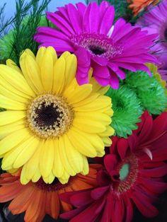 My wedding flowers, gerbera daisies.