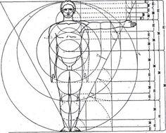 fibonacci spirals in humans - Google Search