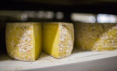 """To the folks at Sweetgrass Dairy, cheese is the """"perfect vehicle to show off grass-fed milk"""" (photo courtesy of Sweet Grass Dairy)"""