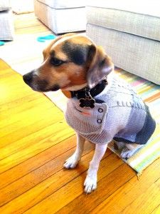 ThunderSweater, dog, anxiety pet life style ,sandy robins, reigning cats and dogs blog