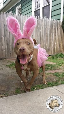 The easter pittie. Look at that happy face!