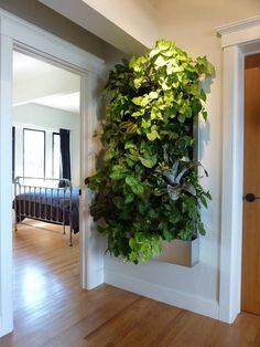 "Urban Garden Living Wall for Small Space Gardens! - Grow living walls in your home – no matter how small that home may be – with tips in this popular guest post from Robin Horton of Urban Gardens. ""Even with li… Vertical Garden Systems, Vertical Garden Design, Vertical Planter, Vertical Farming, Jardim Vertical Diy, Growing Plants Indoors, Grow Lights For Plants, Walled Garden, Garden Living"