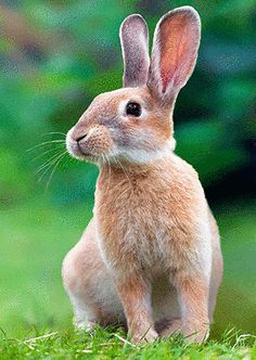 Rabbit Pictures, Animal Pictures, Nature Animals, Animals And Pets, Lapin Art, Woodland Creatures, Cute Bunny, Cute Baby Animals, Spirit Animal