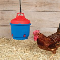 A reliable heated poultry waterer for all seasons. Improved top-fill design with dense lid insulation prevents heat escape from the 3 gal waterer. Heated Chicken Waterer, Automatic Chicken Waterer, Chicken Coops, Keeping Chickens, Raising Chickens, Mold Prevention, Gas Supply, Water Pipes, 3 Things