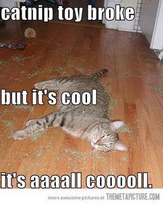 Catnip toy broke…
