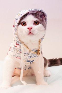 Hip Kitty   Cutest Paw