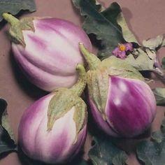 Rosa Bianca Italian Heirloom Eggplant - Solanum Melongena - 25 Seeds