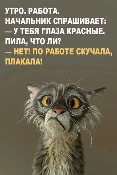 Friendship Quotes and Selection of Right Friends – Viral Gossip Funny Photos, Funny Images, Russian Humor, Tuesday Humor, Funny Jokes, Hilarious, Funny Expressions, Clever Quotes, Just Smile