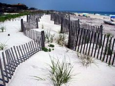 The dunes at Cherry Grove, Fire Island