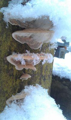 Paddestoelen in de sneeuw
