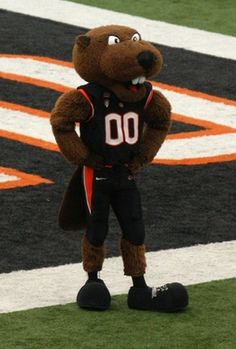 Benny the Beaver, Oregon State University Beavers mascot. He made his sideline debut for OSU in 1952.