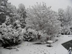 Snow In My Back Yard..