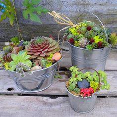 Mini Succulent Dish Garden with a garden creature by sosucculent