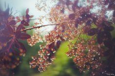 #hot #summer #nature #photoraphy