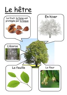 Hêtre Preschool Science, Science For Kids, Science And Nature, Learn French, How To Speak French, French Language Lessons, Montessori Practical Life, French Education, Plant Science