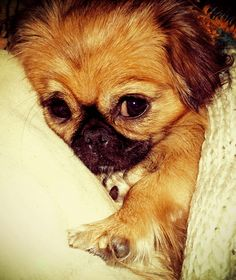 This dog looks like one of the dogs I saw at the dog park yesterday. Oh my life why so cute?