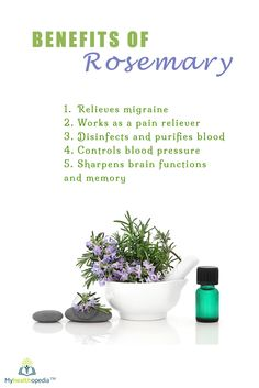 Rosemary (Rosmarinus officinalis) is a fragrant evergreen herb native to the Mediterranean. It is used as a culinary condiment, to make bodily perfumes, and for its potential health benefits.  #paleodiet #healthy #fitness #alkaline #naturalremedies #bestoftheday #monsey #Organic #lakewood #chabbad #fitnyc #Myhealthopedia #food #family #boropark #colliveofficial #gym #rosemary