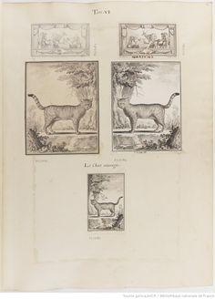 Chat sauvage, Figures pour l'histoire des quadrupèdes, par M. de Buffon.. Tome II / Déssins [sic] originaux par DeSeve et Buvée, avec les Gravures des Editions in12 et in4° vol. 5 à 7.   1755-1758