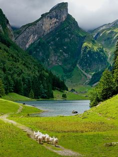 Switzerland #awesome #places Visit www.hot-lyts.com to see more background images