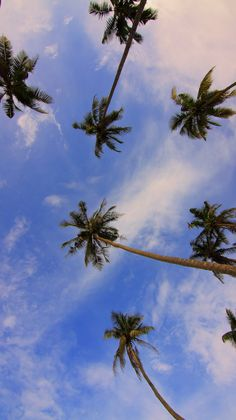 Shop Palm tree beach tropical summer photo panel wall art created by AlemiGifts. Personalize it with photos & text or purchase as is! Wallpaper Sky, Summer Wallpaper, Aesthetic Iphone Wallpaper, Aesthetic Wallpapers, Wallpaper Backgrounds, Palm Tree Iphone Wallpaper, Wallpapers Tumblr, Palm Trees Beach, Metal Tree Wall Art