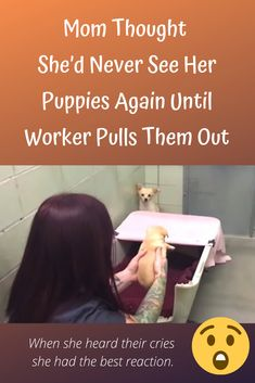 Heartbroken mom thought she'd never see her puppies again until worker pulls them out Shelter Puppies, Dog Rules, Cute Birds, Hilarious, Funny, Body Language, New Pins, Humane Society, Crying