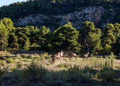 Ranch-Eros Farm: Close Encounters with Animals Close Encounters, Ranch, Greece, Horses, Island, Explore, Country, Animals, Guest Ranch