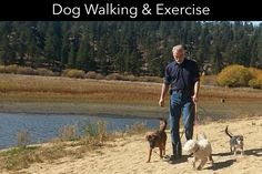 If they don't like to socialize, this may help them to go forward with socialization. Dogs are a really smart learner and just need training from behavioural classes for dogs Yucaipa. Dog Training School, Best Dog Training, Dog Psychology, Dog Search, Walking Exercise, Aggressive Dog, Dog Park, Dog Walking, Humane Society