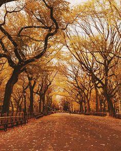 WEBSTA @ beautifuldestinations - Happy #NewYorkCityMarathon on this beautiful day 🍂 (📷: @jssilberman)