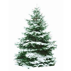 woonhome-kerstboom-poster-kerstboomposter-diy-kerst-boom-boomposter
