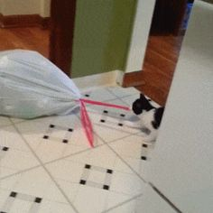 Kitten Takes Out the Litter