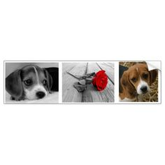 Beagle stickers  beagle training tips, diy puppy ears, puppy biting tips #beaglelife #dogsoffinland #jackrussell, back to school, aesthetic wallpaper, y2k fashion