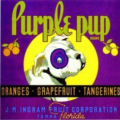 Tampa Florida Purple Pup Dog Orange Citrus Fruit Crate Label Art Print in Collectibles, Advertising, Merchandise & Memorabilia, Labels Vintage Labels, Vintage Postcards, Vintage Ads, Vintage Signs, Vintage Prints, Tampa Florida, Orange Crate Labels, Label Art, Vegetable Crates