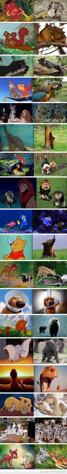 Disney Animals IRL