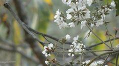 Flores : O inverno tem suas belezas   caiquecandido