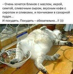 Cute Baby Animals, Animals And Pets, Funny Animals, Russian Humor, Funny Memes, Jokes, Funny Cats And Dogs, Clever Quotes, Fat Cats